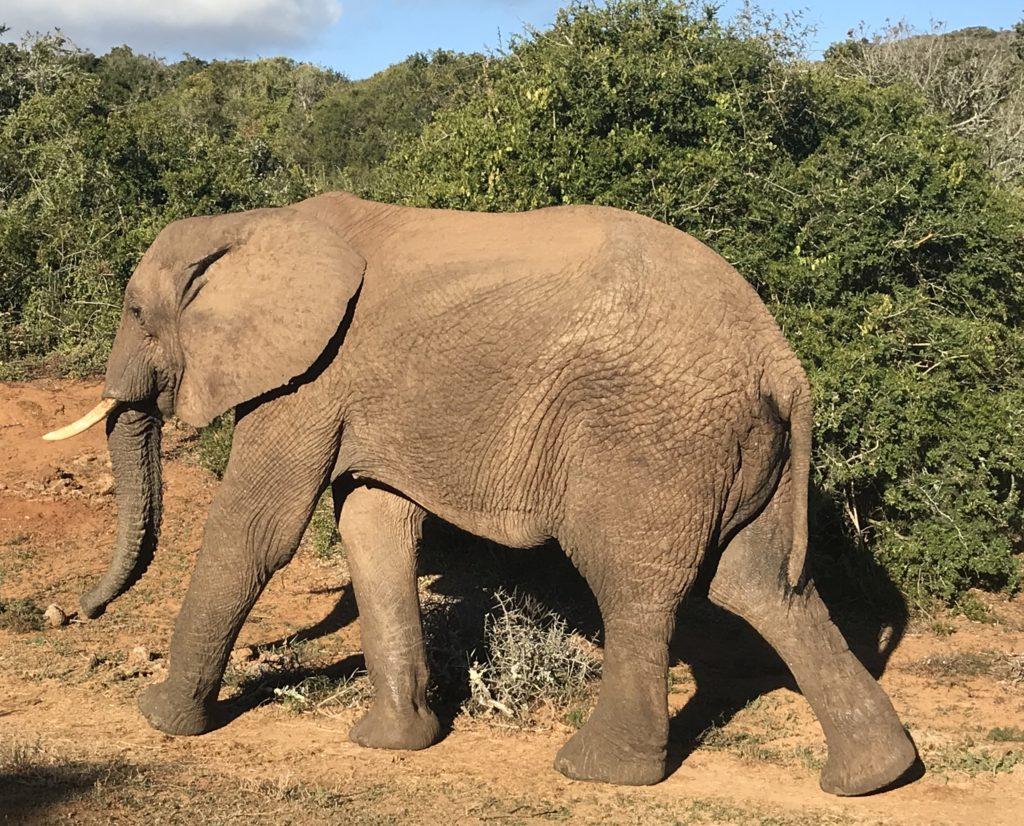 Addo, Elephant National Park