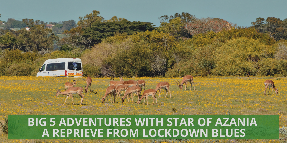 Big 5 Adventures with Star of Azania – A Reprieve from Lockdown Blues